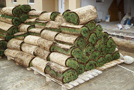 Gotowy trawnik z rolki