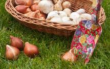 Kwiaty i rośliny cebulowe sadzone jesienią - WIDEO. Maja Popielarska radzi, co sadzić jesienią