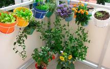 Kiedy sadzić pierwsze kwiaty i rośliny na balkonie? [WIDEO]
