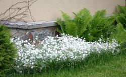 Rośliny ogrodowe lubiące słońce - jakie rośliny do słonecznego ogrodu przydomowego
