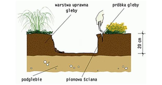 Gleba kwaśna czy zasadowa?